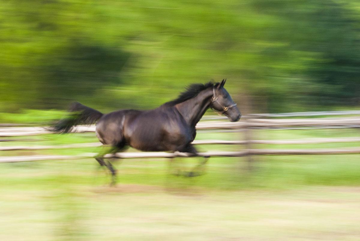 Equine Shiatsu Association, Oriental Medicine theory, Equine Shiatsu