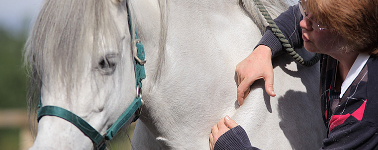 What is Equine Shiatsu