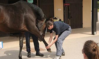 learn equine shiatsu