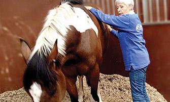 learn equine shiatsu?