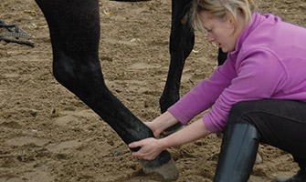 equine shiatsu training