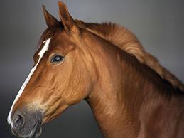 Wood Horse, Horse Elements