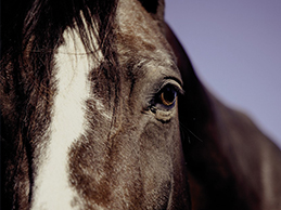 Metal Horse, Horse Elements