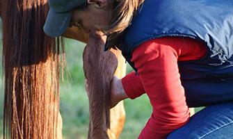 about equine shiatsu