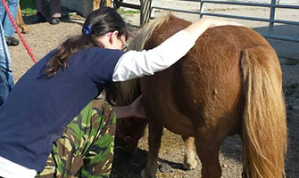 membership to equine shiatsu Association